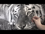 Hyperrealistic Tiger Drawing 85 Hour Time-lapse