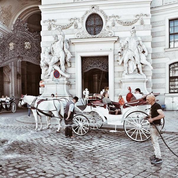 Петербург: ПРЯМЫЕ рейсы в Вену за 11300 рублей туда-обратно