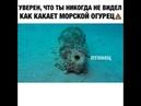 Уверен, что ты никогда не видел как какает морской огурец