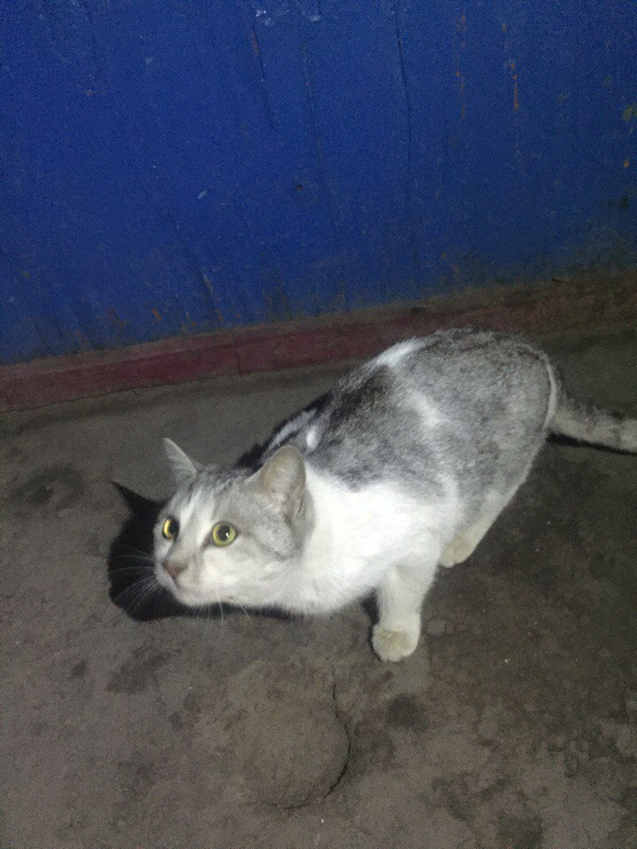 Всем привет, не так давно в районе Инь-Яня (Махабат, 7 мкр, 47-50дома) появилась кошка, всегда рядом ходит где то в окрестностях которые я указала.