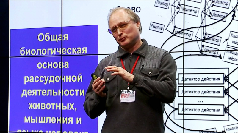 Александр Вартанов Типы кодирования мозга и уровни обратной связи