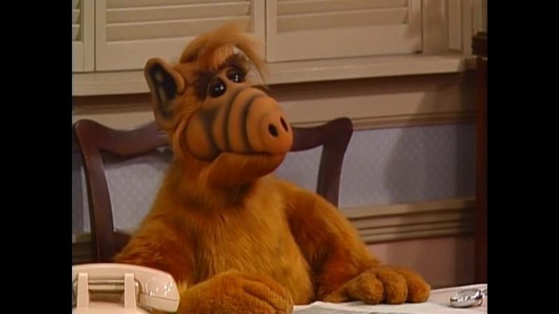 Alf Quote Season 2 Episode 26_Опросы