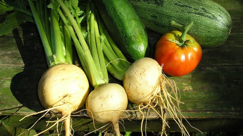Не забудьте посеять в июне Урожай успеет созреть