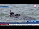 Сюжет ТРК 1-й Крымский: Водолазы «КРЫМ-СПАС» продолжают работу по обследованию пляжных акваторий