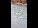 Горная река Абхазия