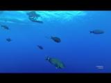 Акула Судан