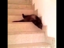 жидкий кот)))