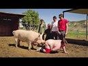 Man is very similar to a pig - Человек очень похож на свинью