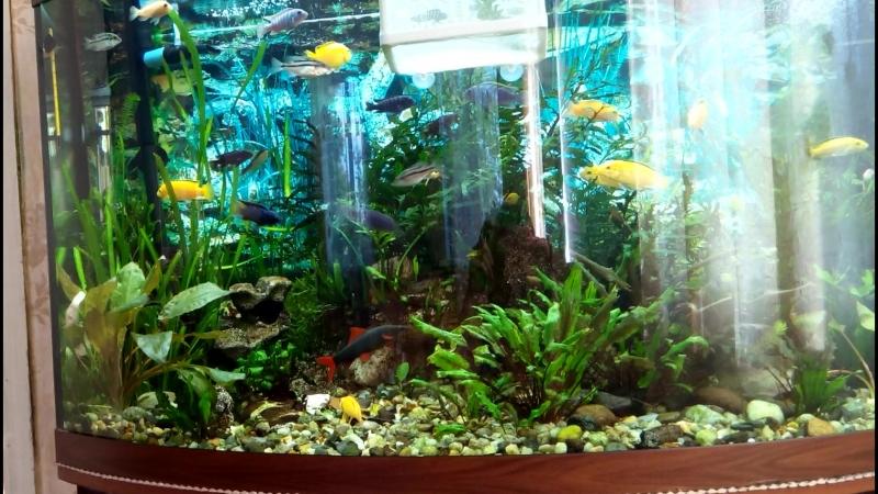 мой маленький подводный мир