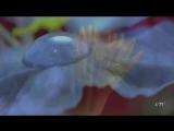 Вальс цветов. Евгений Дога.