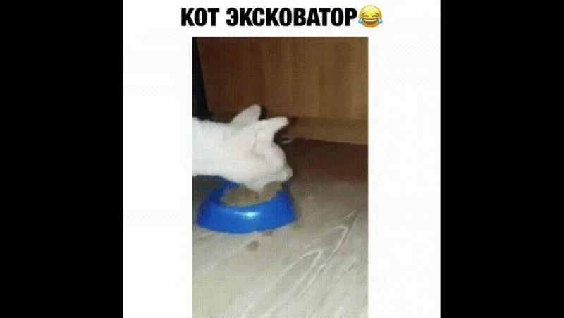 Кот-эскаватор