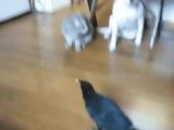 Заботливая пташка-мамочка