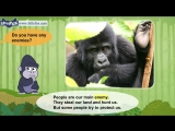 Meet the Animals 2 - Mountain Gorilla - Wild Animals - Little Fox - Animated Stories for Kids.mp4