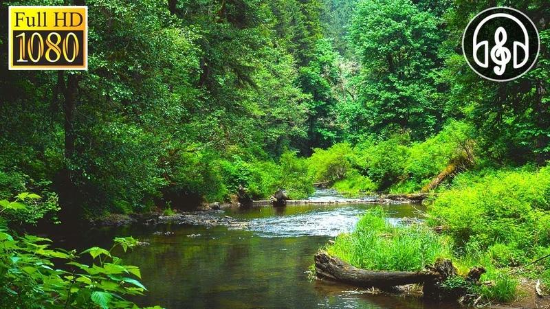 Успокаивающие Звуки Природы: Живой Лес, Пение Птиц, Звук Воды Ручья