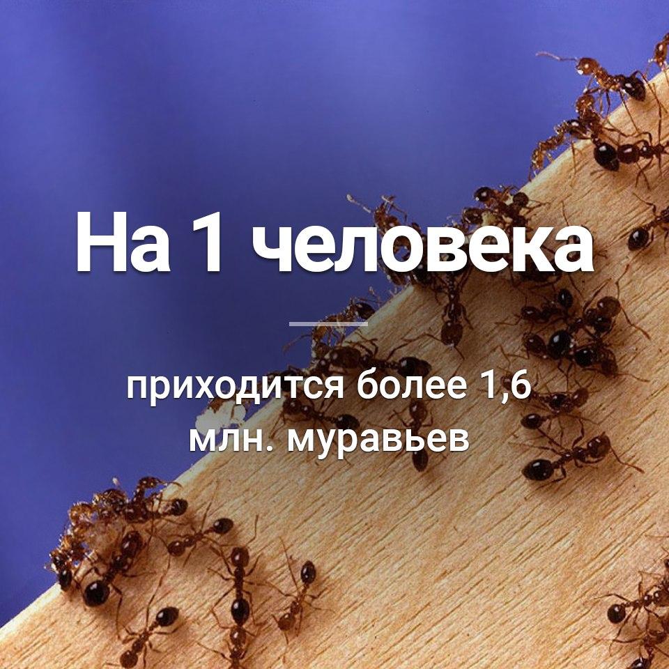 перенял факты о муравьях в картинках нравится наблюдать творениями