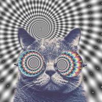 spanchbon avatar
