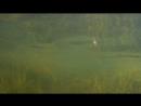Вторая плотина. Подводные пейзажи.