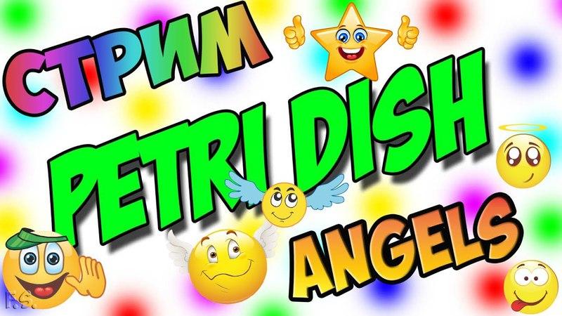 Petri Dish   AngelS   Стрим 48