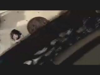 Шрек мороз, зеленый нос (ТВ) / Shrek the Halls (2007)