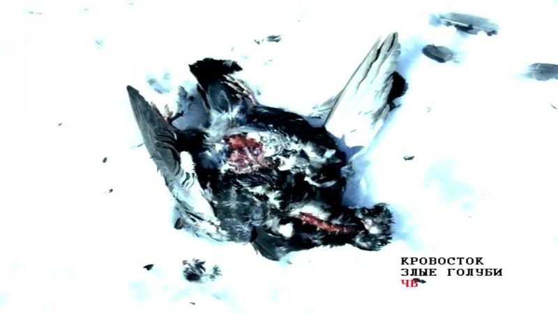 Кровосток - Злые голуби (2018)