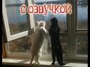 Приколы с котами – смешная озвучка животных – УГАР до слёз от кота Мурзика лютый юмор от Domi Show