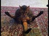 Приколы про животных с котами и кошками #1 Очень смешная подборка