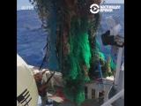 Остров из мусора в океане оказался в 16 больше, чем думали
