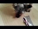 Собачья радость - SoulCore