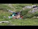 Медведь съел запасы туристов в Красноярске