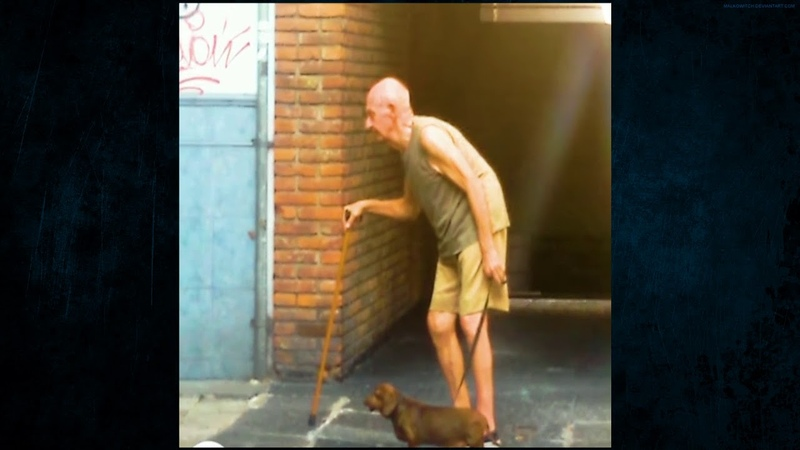 Patient Dog Walks Slow So That The Old Man (OWNER) Can Keep Up