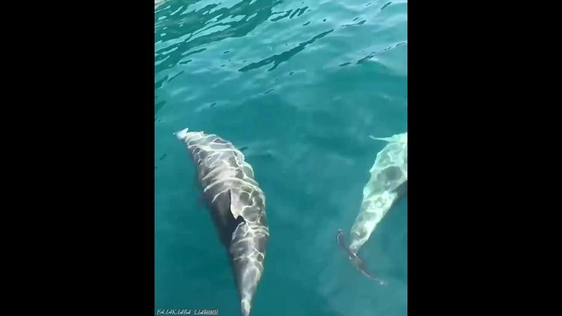 Балаклавские дельфины