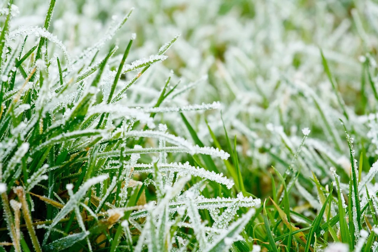 Метеопредупреждение: заморозки в ночные и утренние часы