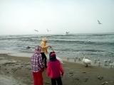 Лебеди на Балтике