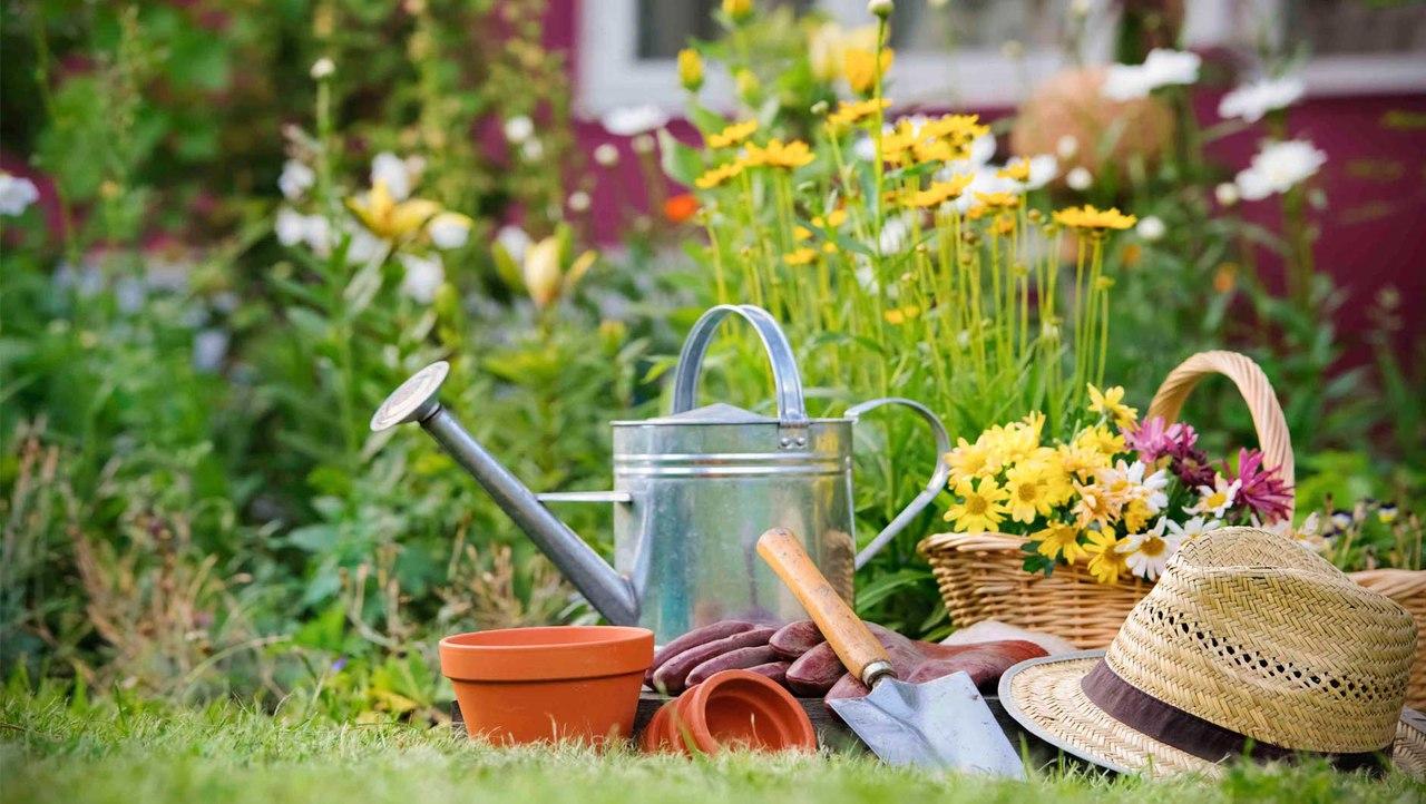 Картинки красивой весны дачников цветоводов прикольные, кошки для