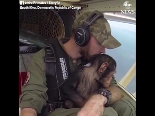 видео NewsChannel 9 ..Муса-штурман на один день..)))).. Этот Муса, маленький шимпанзе, которого спасли от охотников в Конго. Что
