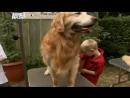 Введение в собаковедение Серия №25