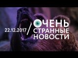 22.12 | ОСН #19. Медведи в России