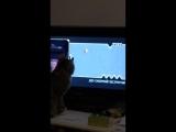 ТНТ придумали интересную игру для котов 😸