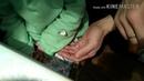 ГУСЕНИЧНАЯ ФЕРМА Бабочка из гусеницы в середине октября Вывели бабочку капустницу дома Сюрприз