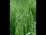 Кристалл - Вода  Ионизированный пар  Свет - Зеленый лист (дерево, травы) - Человек.