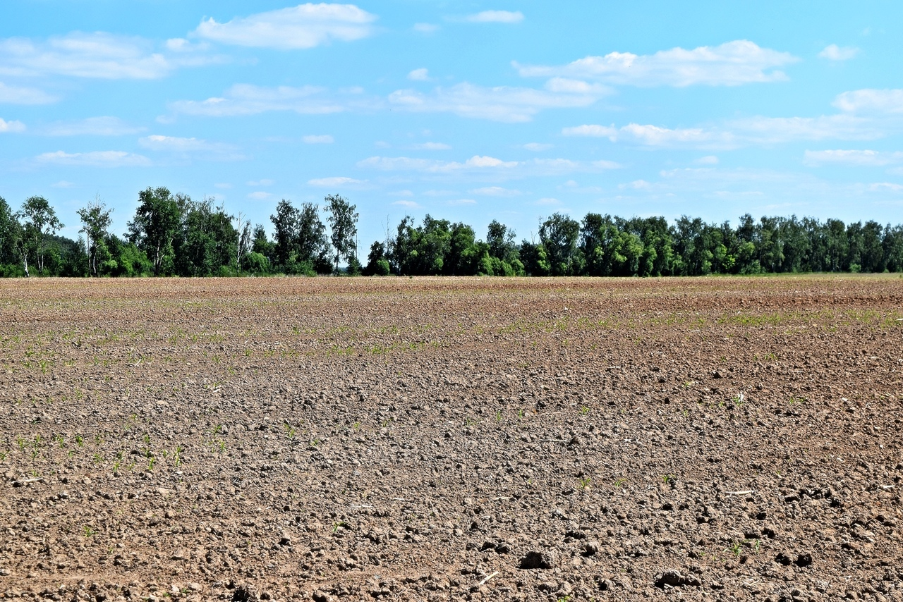 А затем, через поле засеянное кукурузой. Село оказалось совсем небольшое и мы немного прогулявшись по его улочкам вышли к храму.