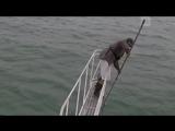 Акула едва не пообедала биологом