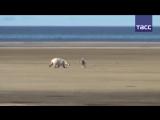 Пёс охраняет ученых от белых медведей