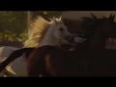 Песня про лошадь.mp4