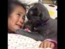 Котей успокоитель