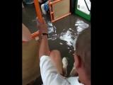 Автобус Красноярск потоп 03.07.2018