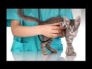 Кастрация и послеоперационный уход за кошками