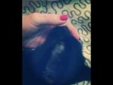 А как любите вы?😂😂 #myc А как любите вы?😂😂 #mycat #love #туся #cat #lukyanovastyle at #love #туся #cat #lukyanovastyle