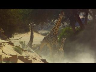 BBC Земля: Один потрясающий день (Познавательный, природа, путешествие, приключения, семейный, 2017)