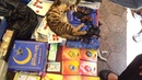 Cats at Istanbul Book Market. 24.06.2013